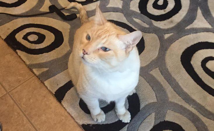 cat, cat behavior, feline behavior, pet, client