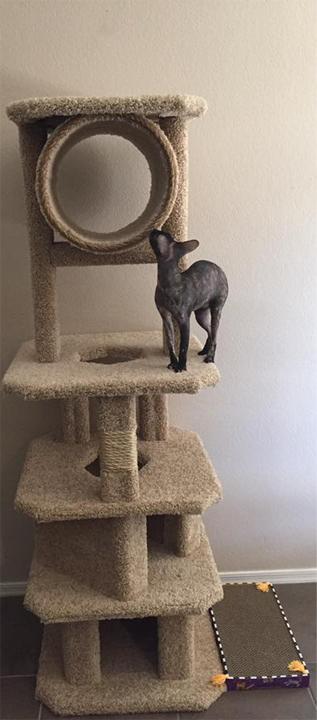 bianca, cat, cat behavior, feline behavior, pet, cat tree, cat condo, scratching post