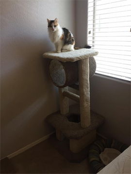 fiona, cat, cat behavior, feline behavior, pet, cat tree, cat condo, scratching post
