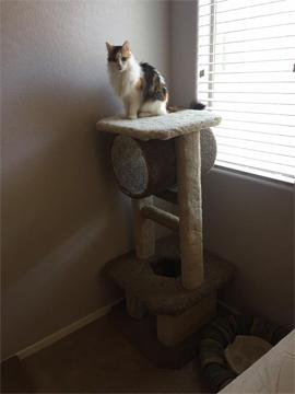 fiona, cat, cat behavior, feline behavior, pet, cat tree, cat condo, scratching post