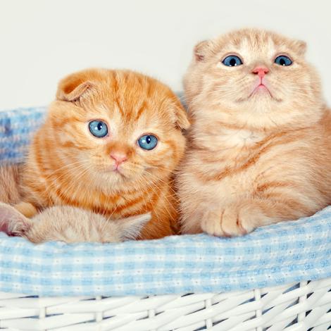 kitten, cat behavior, feline behavior, socialization