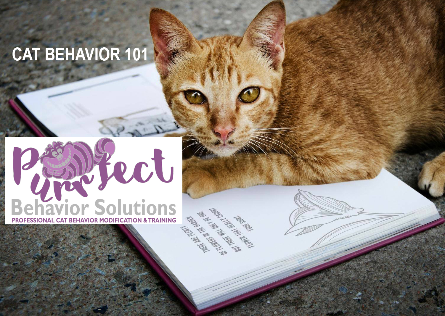 purrfect behavior solutions, cat behavior 101, seminar, class, cat behavior, study, professional