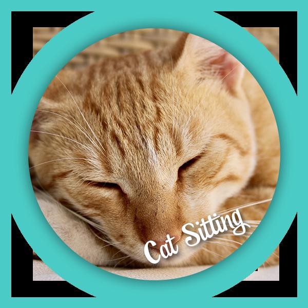 purrfectbehavior_catsitting